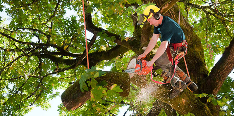 Why Emergency Tree Removal Service Is Better Than Diy in York PA?