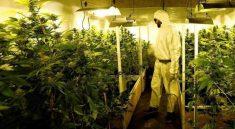 Cannabis PPE